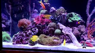 Reefs.com Aquarium Tips: Carbon. Going over facts and myths.