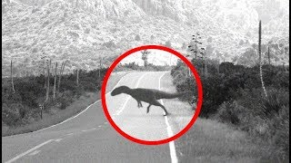 The Africa Monster | Modern Day Dinosaur Sightings In South America?