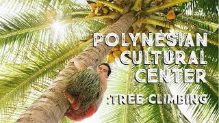 Coconut Tree Climbing at the Polynesian Cultural Center