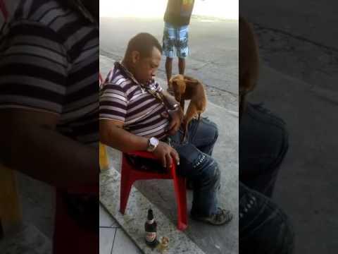 Dog girl sexi video
