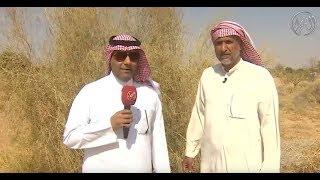 عبيد العوني كواليس قناة الصحراء  منتزة ثادق البري -اشجارنا البرية في الحمى-