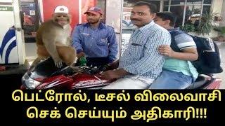 பெட்ரோல், டீசல் விலைவாசி செக் செய்யும் அதிகாரி!!!