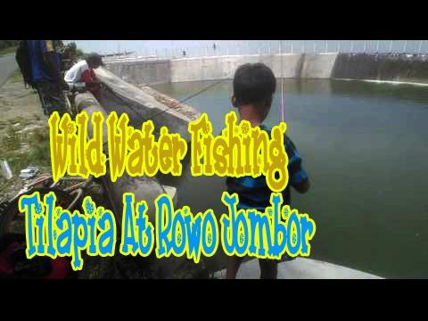 Wild Water Fishing : Atempt Tilapia At Rowo Jom,bor Floodgate