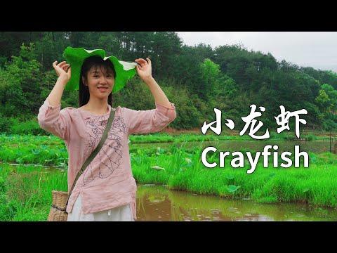 小龙虾配啤酒,这个夏天独特的味道,我一个人可以吃10斤 Crayfish with beer this summer s unique taste I can eat 10 jin