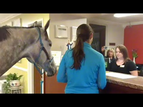 Xxx Mp4 Woman Checks In To Pet Friendly Motel With Her Horse 3gp Sex