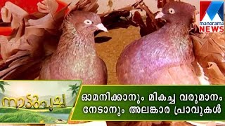 An interesting and profitable Fancy Pigeon farming  | Manorama News