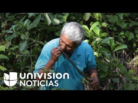 El buscador de fosas que huele la muerte en México
