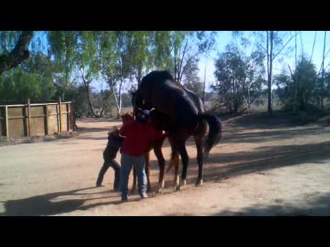 Xxx Mp4 Horse Having Sex 3gp Sex