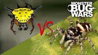 Spider vs Spider Showdowns #6-8   MONSTER BUG WARS