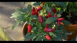 Edible Gardening in the Shade. Sustainable Gardening Australia (SGA)