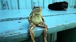 A Frog Sitting on a Bench - www.manisat.blogspot.in.flv