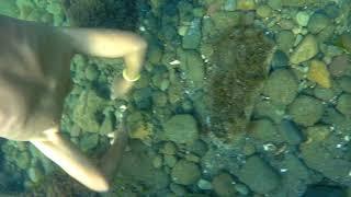 Su altı kamerası ile denize dalmak.MÜKKEMMEL