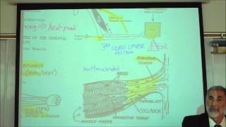ANATOMY; MYOLOGY; PART 1; CHARACTERISTICS OF MUSCLES by Professor Fink