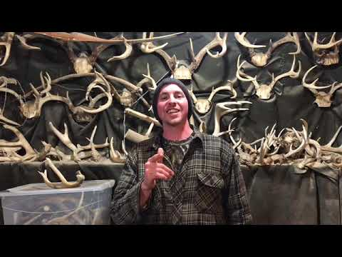 Xxx Mp4 Shed Hunting 2018 Part 4 Some Big Old Antlers 3gp Sex