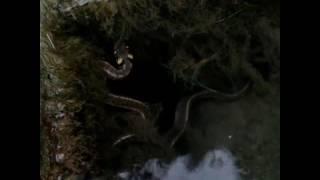 Doğa Çeşme başında bu yılanla karşılaştık önce koktuk 😱 sonra inceledik 😎 çok  güzel maşallah 😁