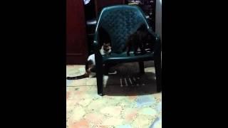 Cat Of Fighter