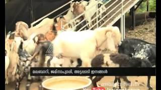 Thrissur Chelakkara Abdul Khaders Goat farming