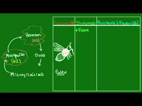 Filariose Parasitologia Biologia