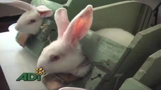 Animal chemical testing