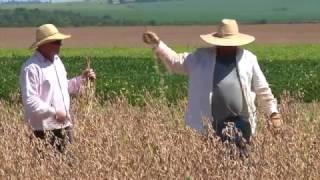 Mercado de trabalho no agronegócio brasileiro - TV USP Informa 61