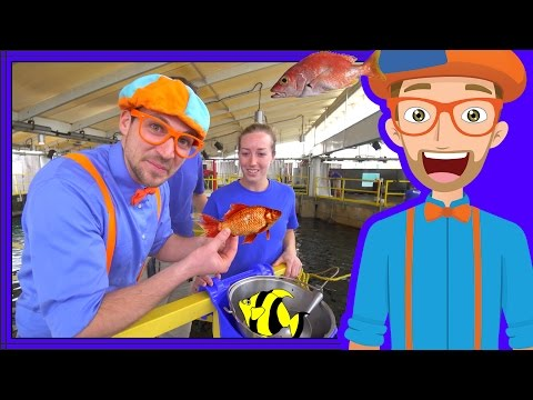 Xxx Mp4 Learn About Fish For Children With Blippi Educational Videos For Kids 3gp Sex