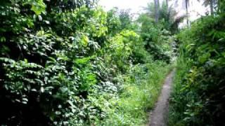 Bush hike outside Bo Sierra Leone