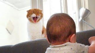 고양이 노을이의 아기 보기 Noel the Cat's Babysitting [SURI&NOEL]