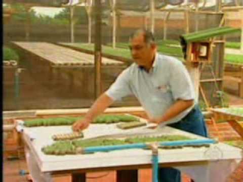 Record Rural Família cultiva plantas com sistema hidropônico em bairro da Capital
