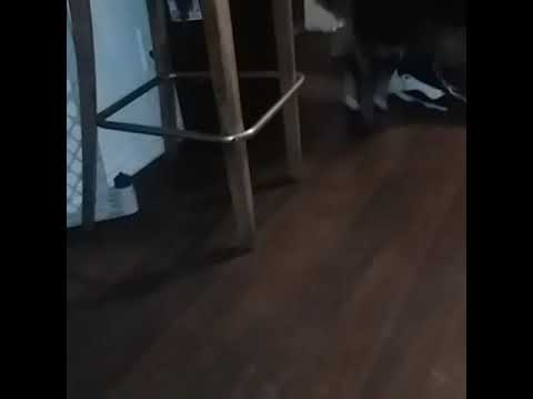 Xxx Mp4 Dog Gone Crazy Behind Dog Pussy 3gp Sex