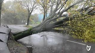 VIDEO: Trees downed and roads blocked as Storm Ophelia rages through Cork
