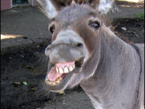 Man Caught Having Sex With Donkey @Hodgetwins
