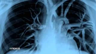 Human Heartbeat -animation video-
