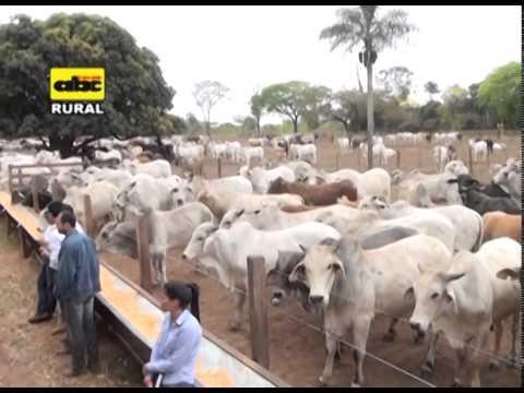 Alimentación de ganado a grano entero