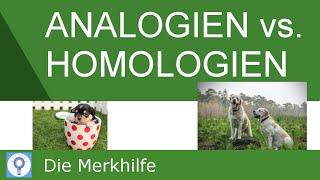 Analogien und Homologien & Nachweis von Homologien - Systematik der Tiere | Evolution 20