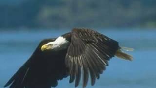 Aves em vôo - Os verdadeiros senhores dos céus!!!
