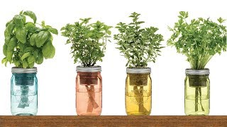 9 Herbs You Can Grow In Water Over And Over Again For Endless Supply