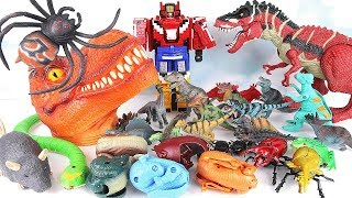 Big Head Dinosaur T-Rex Toyset! Learn Names Of Dinosaur With Robot, spider, Frog, eggs~