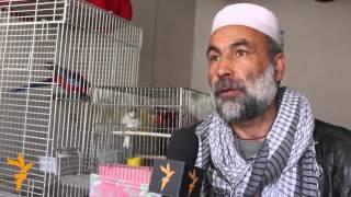 حیوانات و پرنده های نایاب در کوچه کاه فروشی