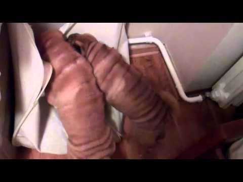 Xxx Mp4 Niki S And Lucky S Puppies Shar Pei Sock Fetish 3gp Sex