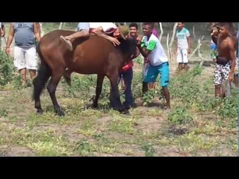 Amansando Cavalo Santa Barbara BA