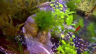 Timelapse video of a planted aquarium - 3 months in 5 minutes