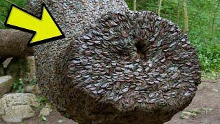 Vidio je drvo prekriveno zahrđalim novčićima,približio se i ugledao Jezivu tajnu o njemu !