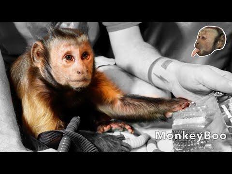 Xxx Mp4 Monkey Worm Fun HILARIOUS 3gp Sex