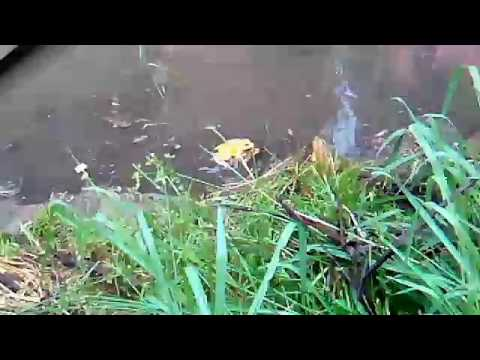 Xxx Mp4 New Funny Video │Frog Sex Video Very Funny Video Full HD 3gp Sex