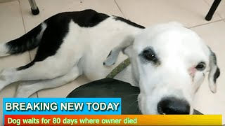 Breaking News - Dog waits for 80 days where owner died