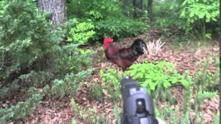 Chicken, give me tendies!