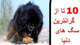 ۱۰ تا از گرانترین سگ های دنیا