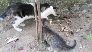 Yavru kedinin  sokakta kendini koruma çabası