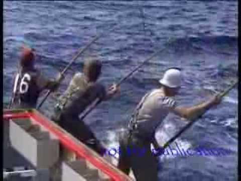 Tuna fishing 85 Port Lincoln 150 lbs plus fish biggest seen in my years fishing
