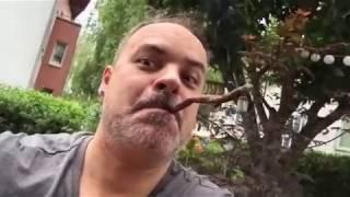 Villiger original Krumme Zigarre